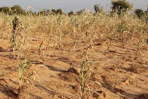 Preparing for climate-related food shocks