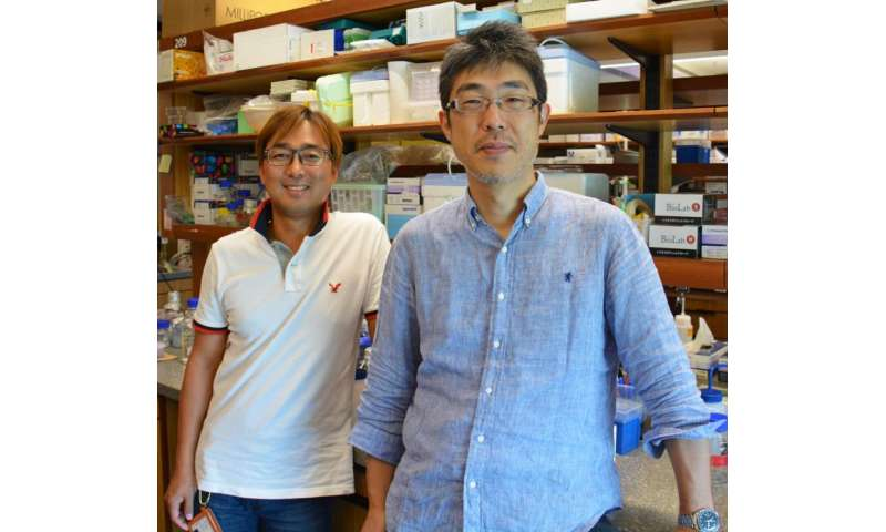 Sabotaging bacteria propellers to stop infections