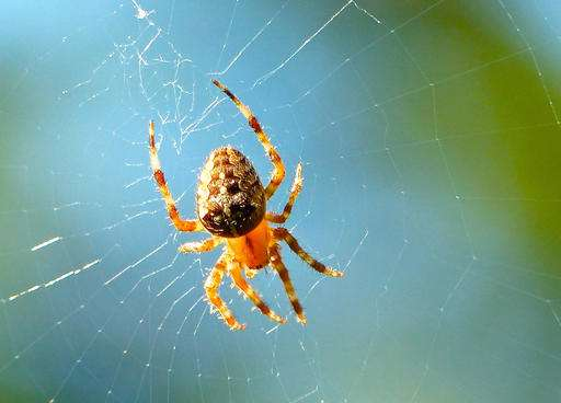 Spiders are among most effective predators of plant pests