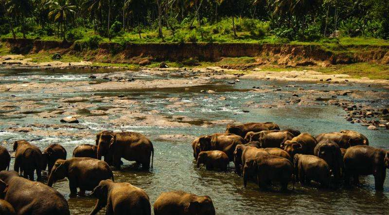 Researchers study health issues linked to wildlife-human interactions