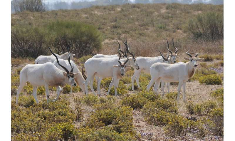 Climate change puts most-threatened African antelopes in 'double jeopardy'