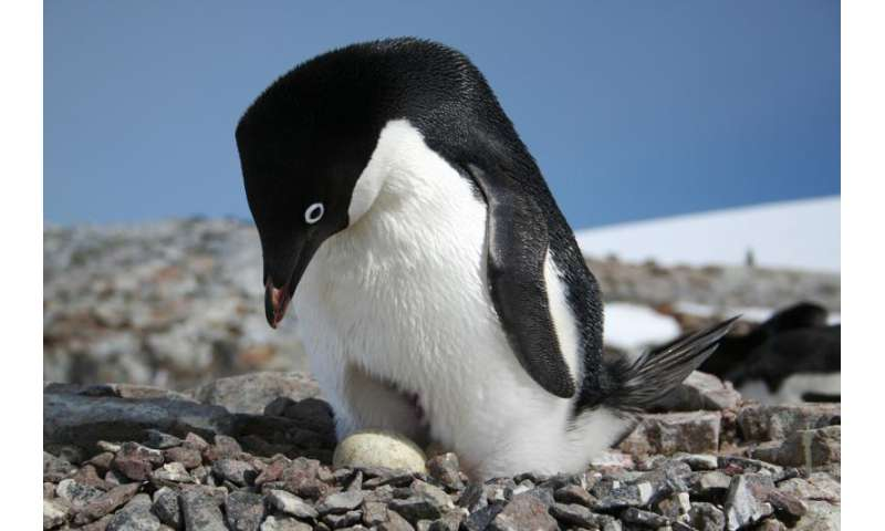 Citizen Scientists Can Now Lend a Hand in Penguin Conservation
