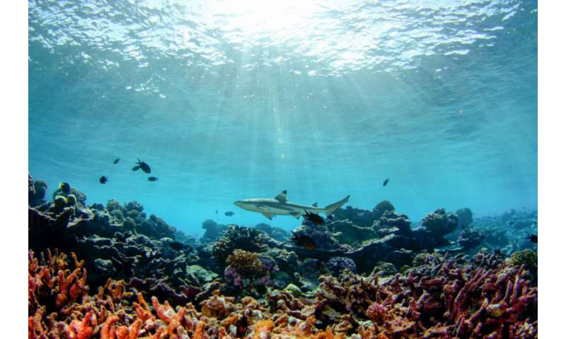Research shows how wave dynamics and water flows affect coral reefs