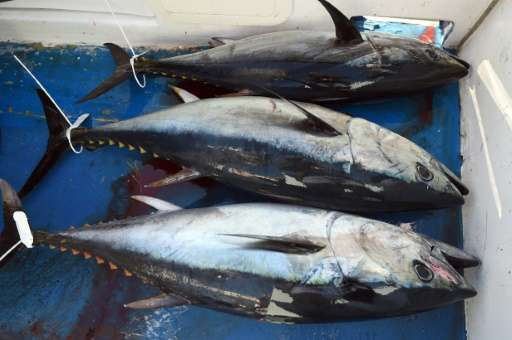 276,000-338,000 tonnes of Pacific tuna are taken illegally every year