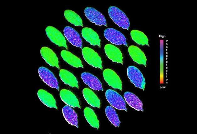 Newly discovered algal enzyme could help improve efficiency of photosynthesis and boost crop productivity