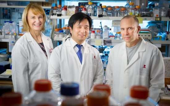 Newly discovered immune cell type protects against lung infections during chemotherapy