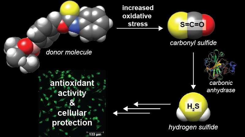 University of Oregon lab creates new class of hydrogen sulfide donor molecules