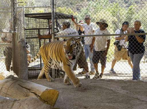 Big cats returned to California sanctuary threatened by fire