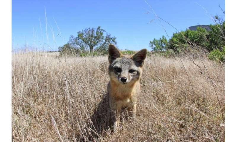 Conservation silver bullet: Invasive-mammal removal yields major biodiversity benefits