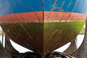 Environmentally friendly polymer coatings inhibit the surface buildup of bacterial and marine organisms