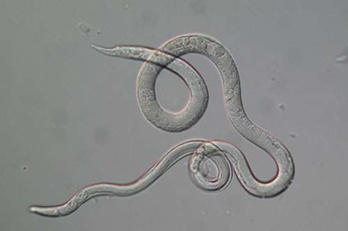 Exploring the genomic basis of parasitism