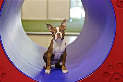 'Fear-free' veterinarians aim to reduce stress for pets