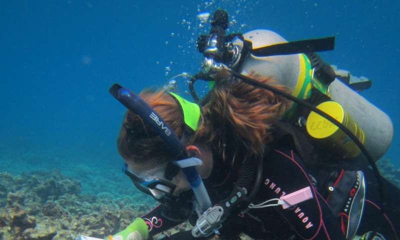 New imaging technique reveals vulnerability of coral reefs