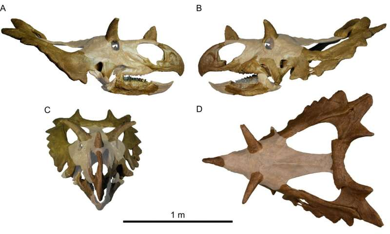 New species of horned dinosaur with a spiked 'shield'