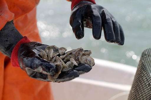 Oyster hatchery sows pearls of wisdom on climate change