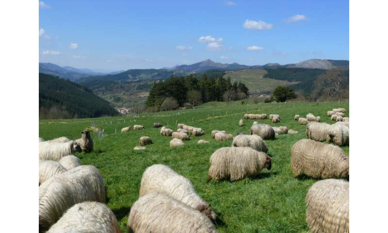 Regenerative grazing improves soil health and plant biodiversity
