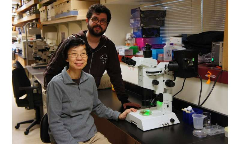 Scientific serendipity yields new neuron type in mouse retina
