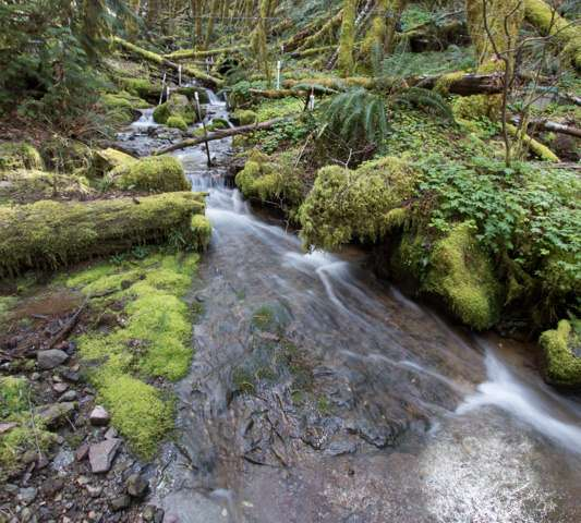 Small headwater streams export surprising amounts of carbon out of Pacific Northwest forest