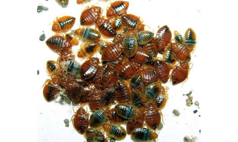 Image result for Bed Bug Infestations