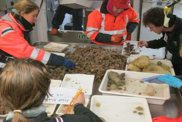 Study finds increase in Antarctic marine worm species