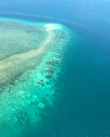The Great Barrier Reef is under pressure from farming run-off, development, the coral-eating crown-of-thorns starfish as well as