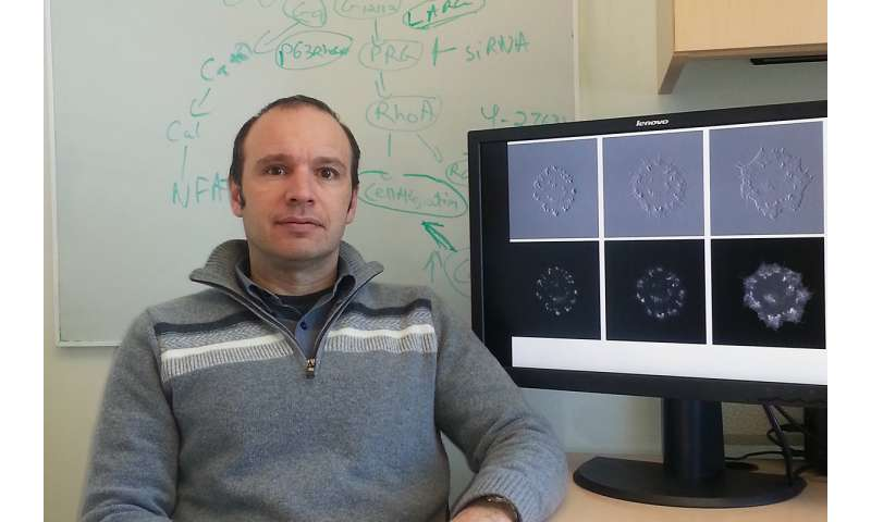 New technique switches key biomolecules on and off