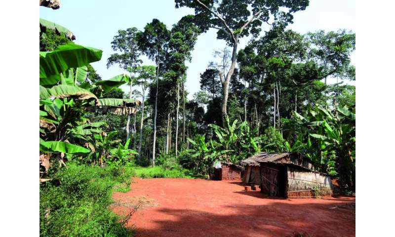 Biodiversity conservation policies in tropical forests threaten the livelihood of indigenous peoples