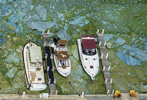 Curing Florida's algae crisis will take time, money, science