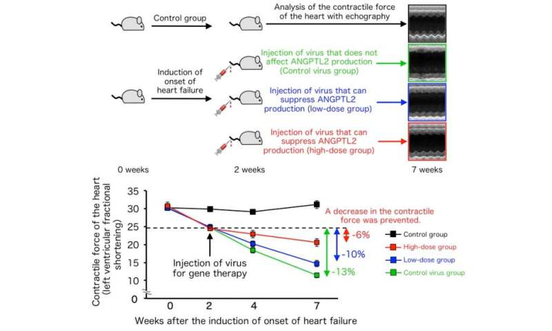Discovery and gene therapy treatment of a novel heart failure mechanism