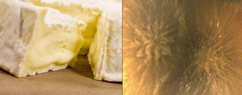 Molecular biologist talks cheese