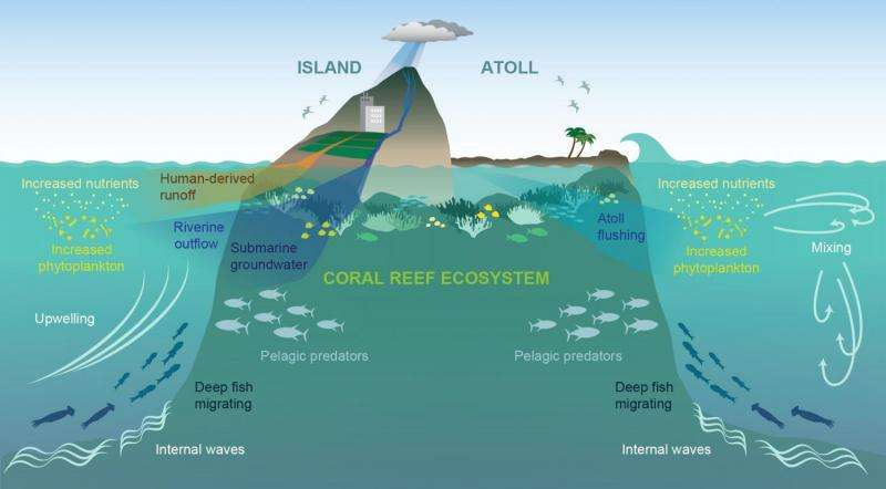 Research explains near-island biological hotspots in barren ocean basins