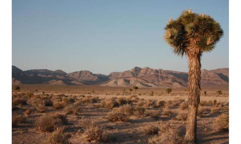 Scientists using crowdfunding to sequence the genome of Joshua tree
