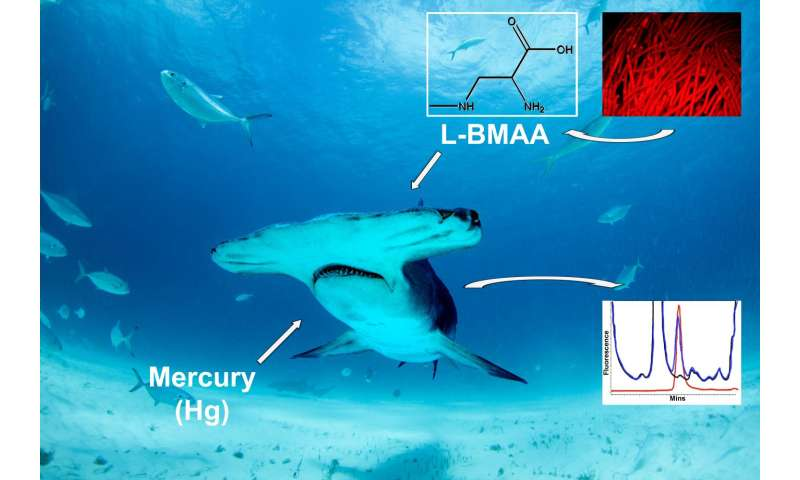 Study finds shark fins & meat contain high levels of neurotoxins linked to Alzheimer's disease