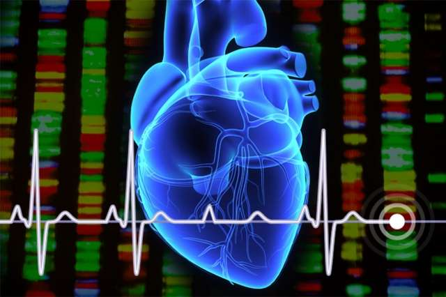 Study identifies new gene variants that may be targets for treating arrhythmia