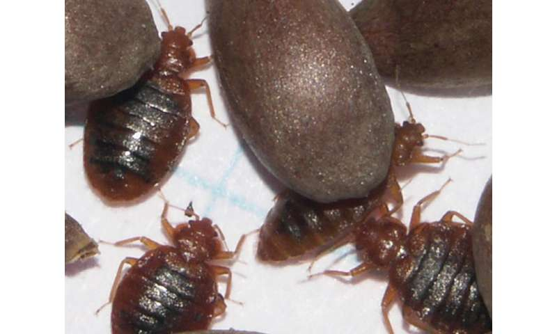 Researchers sequence first bedbug genome