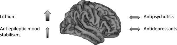 Brain structural effects of psychopharmacological treatment in bipolar disorder