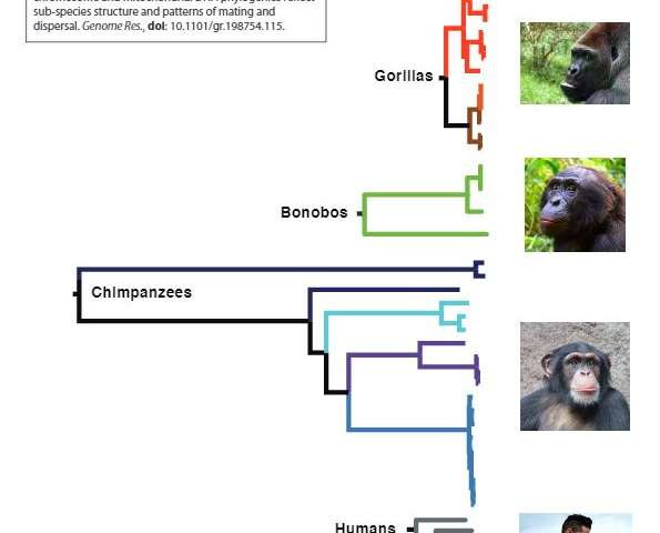 Ancient chimpanzee 'Adam' lived over one million years ago, research reveals