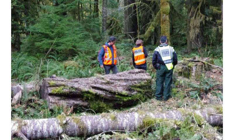 Genetic profiling of trees helps convict timber thieves