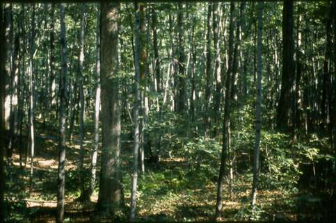 Eastern US forests more vulnerable to drought than before 1800s