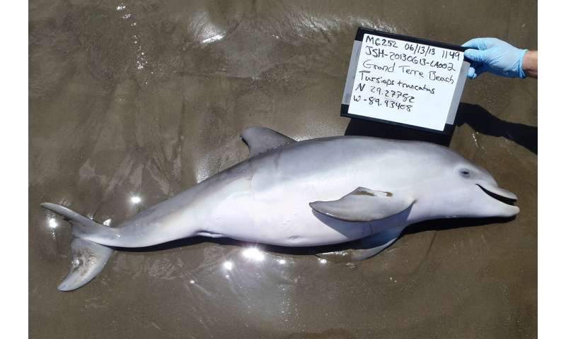 Study links fetal and newborn dolphin deaths to Deepwater Horizon oil spill