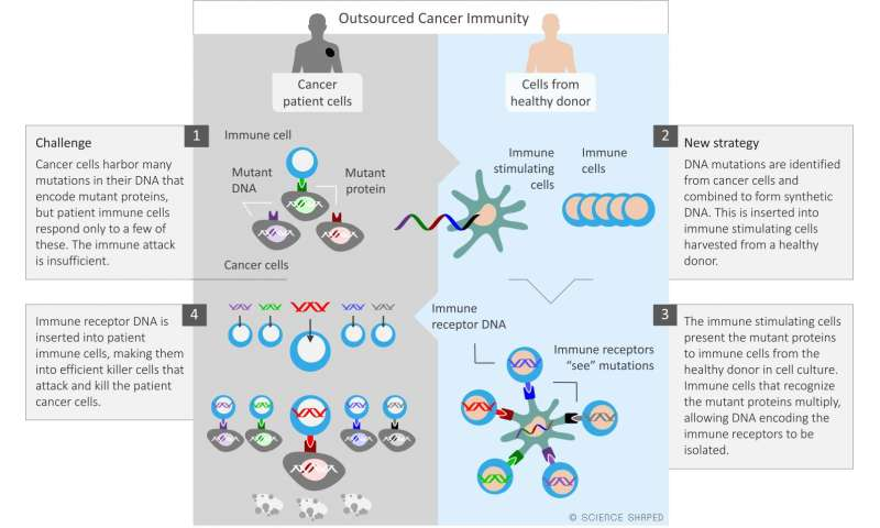 Fighting cancer with the help of someone else's immune cells