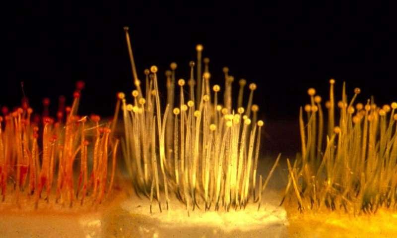 Cuing environmental responses in fungi