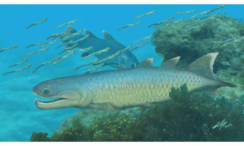 Skull analysis of Qingmendous offers insight into creatures between pre-lobed fish and tetrapods