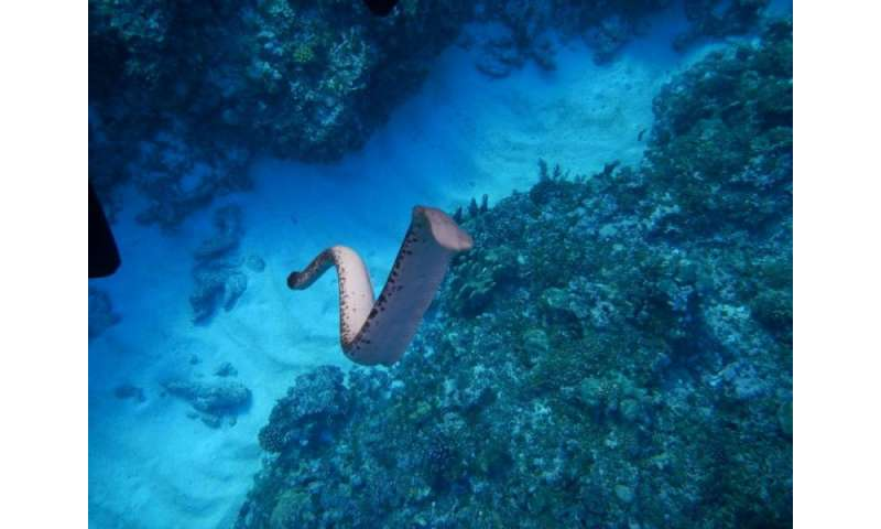 Sea snakes can sense objects at a distance by feeling movements in the water 5757e9e156ed0