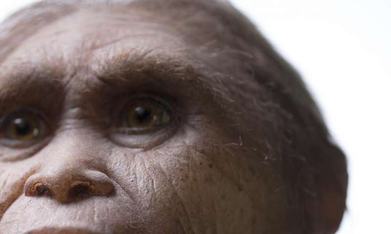 Likely ancestor of mystery 'hobbit' found