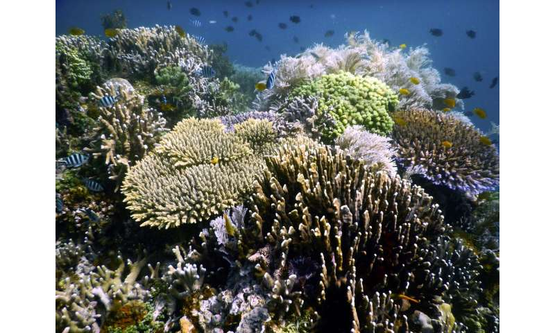 Bright spots shine light on the future of coral reefs