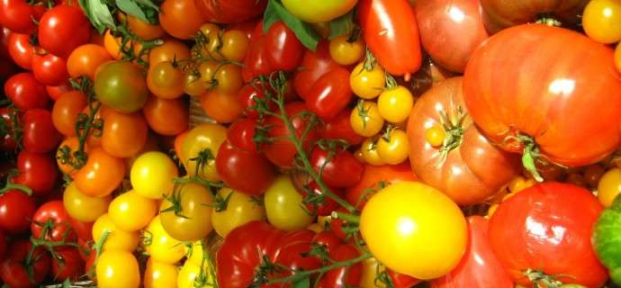 57 varieties of tomato