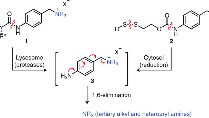 Targeted drug therapy with carrier links to tertiary and heteroaryl amines