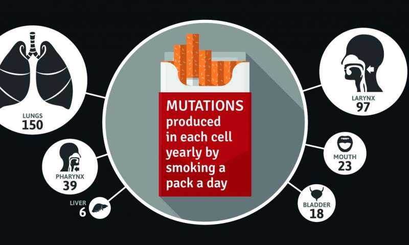Smoking a pack a day for a year causes 150 mutations in lung cells