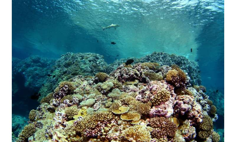 Understanding the conditions that foster coral reefs' caretakerfishes